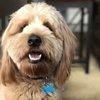 01042017_Charlie_service_dog
