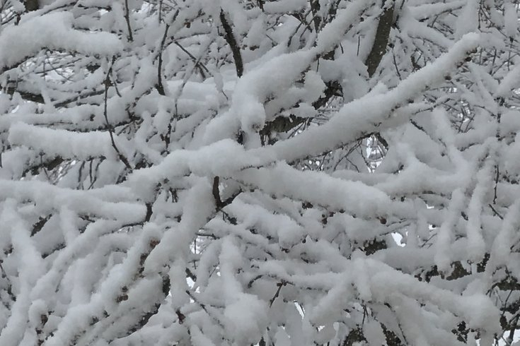 01102019_Snow_on_trees_BM