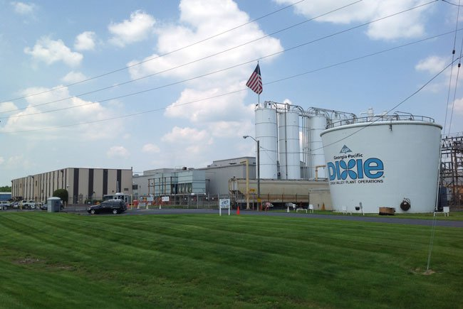 Dixie Cup Plant Pennsylvania