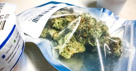 Carroll - NJ Marijuana Dispensary