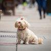 Carroll - A dog on Passyunk Avenue in South Philadelphia