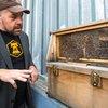 Carroll -Bees on the Sofitel Hotel