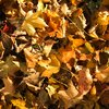 Stock_Carroll - Autumn Leaves