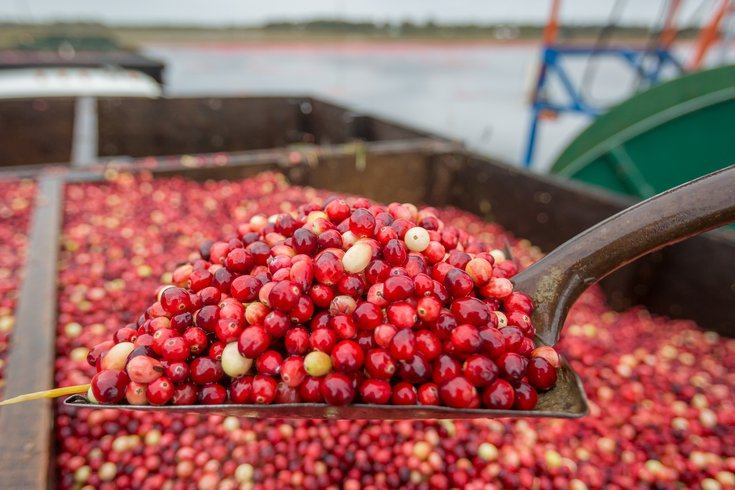 Carroll - NJ Cranberry Harvest