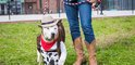 Carroll - PSPCA dogs in costumes