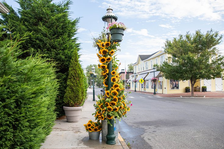 Cape May flower displays