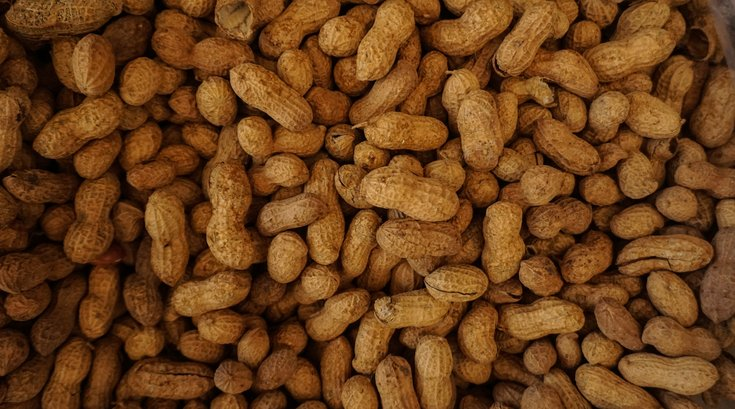Palforzia Peanut Allergy Drug