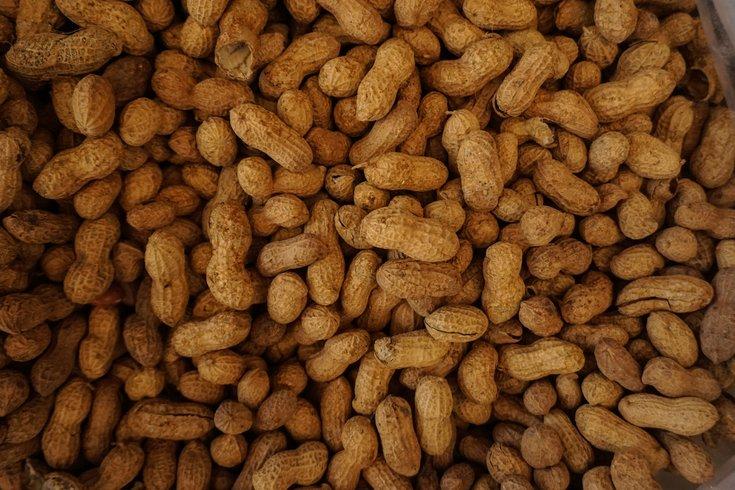 Palforzia Peanut Allergy Drug