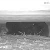 Black Bear Cam Pennsylvania