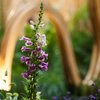 022615_Flowers_Carroll-04.jpg