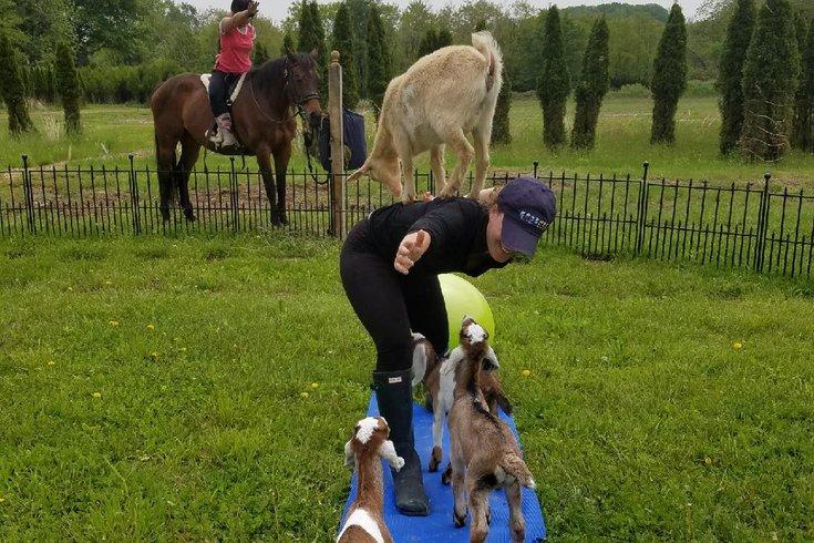 Horse & Goat Yoga