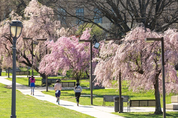 Carroll - People Running and Exercising as Cherry Blossom Trees
