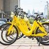Carroll - Ofo bike share bicycles in Camden, NJ