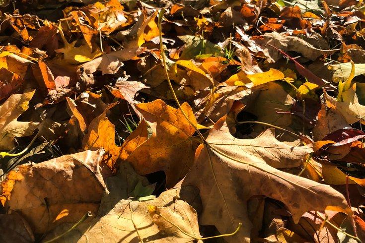 Stock_Carroll - Autumn Leaves