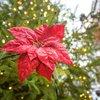 Stock_Carroll - Holiday Decorations in Philadelphia