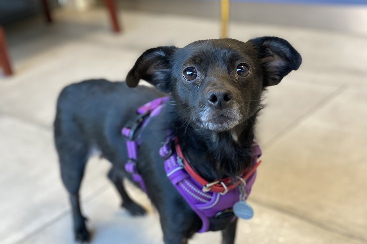 Pet of the Week: Tinsel