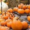 Stock_Carroll - Pumpkins
