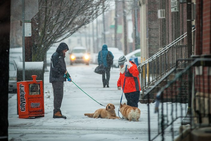 Snow and paws in Fairmount
