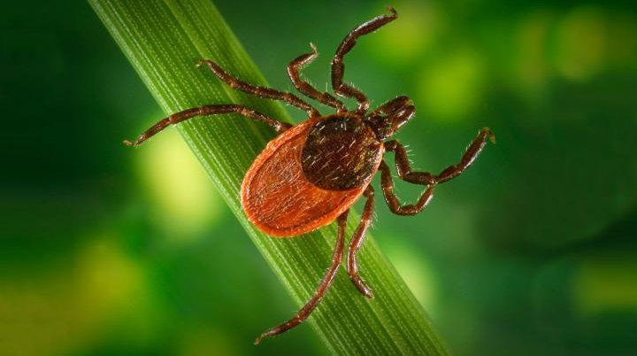 New model makes reporting Lyme disease easier