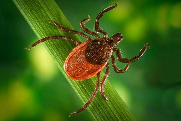 New model makes reporting Lyme disease easier