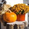 Stock_Carroll - Autumn