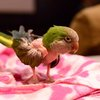 04052016_rescued_parrot