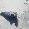 040917_seal_rescue2