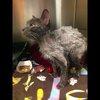 041017_maisy_cat