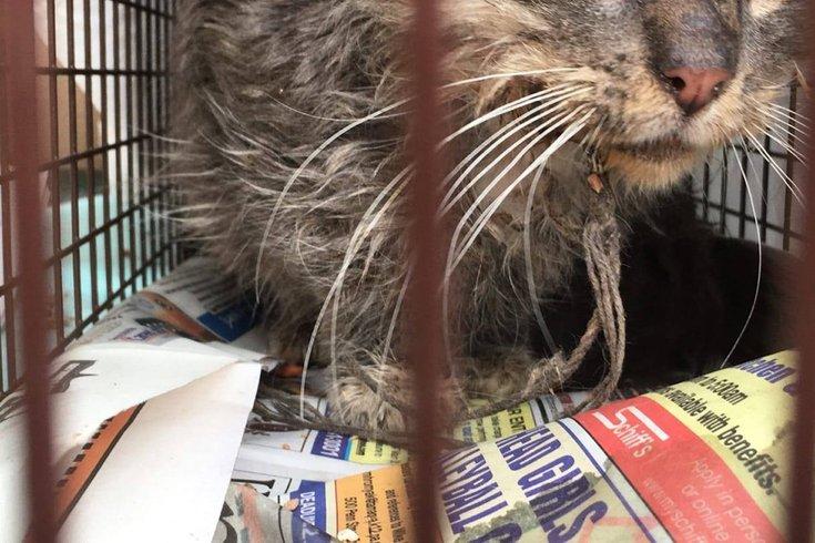 0411_Fishhook abandoned cats