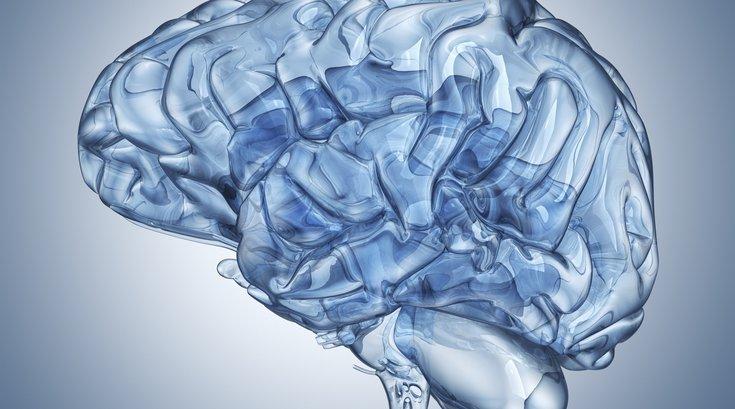 Brain Sex Differences