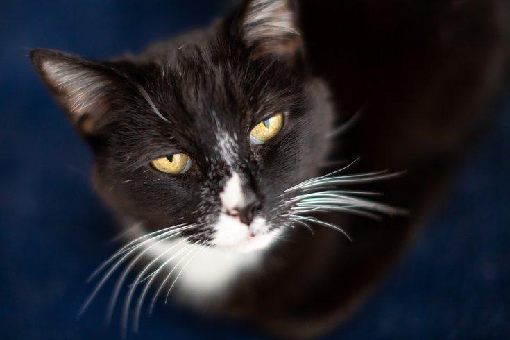 Carroll - Cat