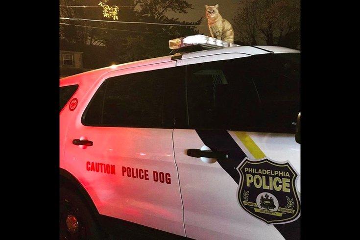 043017_cat_police