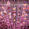 Carroll - PHS Philadelphia Flower Show