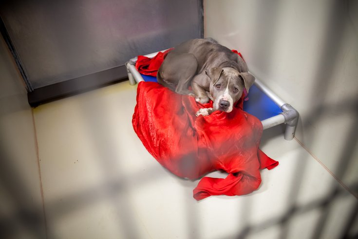 Carroll - ACCT Philadelphia Animal Shelter
