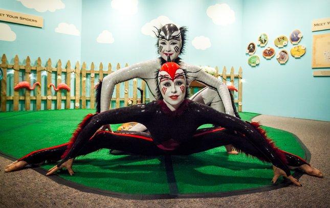 Carroll - Cirque du Soleil OVO