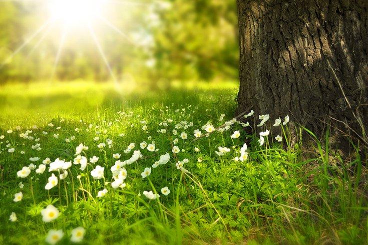 Nature Flora 05012019