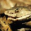 Copperhead Snake Berks County