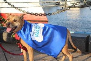 Philadelphia Water Department dogs