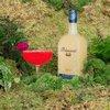 Philadelphia Distilling's Bluecoat Elderflower Gin