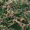 05122015_pollen_Montco