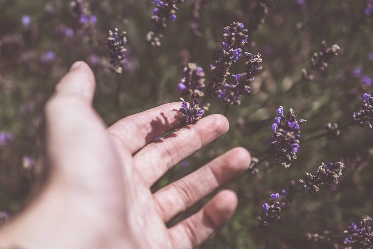 lavender anxiety treatment