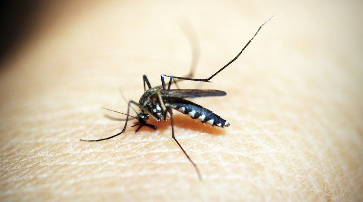 essential oil mosquito bite treatment