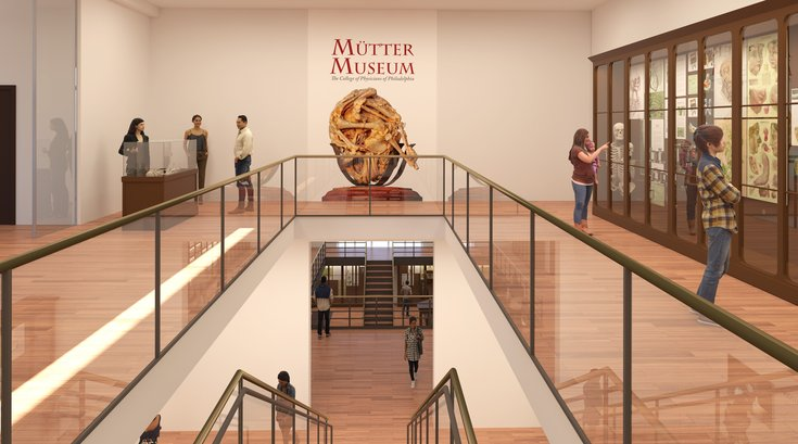 Rendering of Mutter Museum renovations