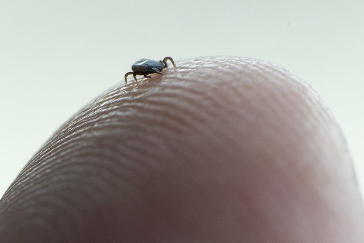 lyme disease and ticks