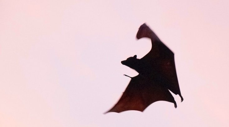 bats cause rabies