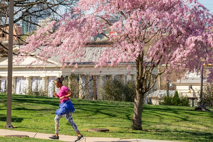 Carroll - Woman Running and Exercising as Cherry Blossom Trees Bloom