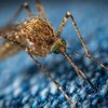 mosquito west nile virus indiana