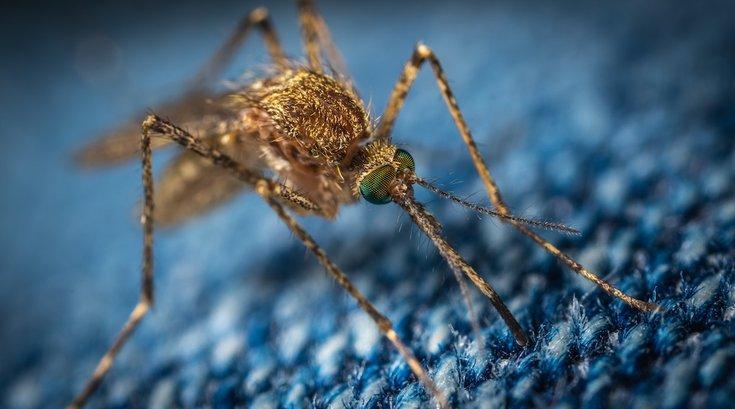 mosquito west nile virus indiana