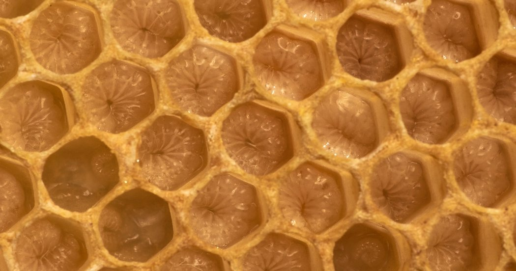 What You Should Know About Trypophobia The Extreme Aversion To