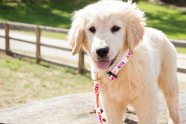Dogs for Joy Dunkin 07222019